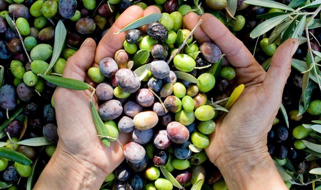 Hogyan érdemes olívaolajat választani?